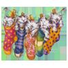 Gatos Calcetines